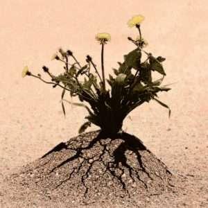 Riconsiderare l'IT durante il Coronavirus. L'immagine rappresenta il concetto di resilienza, di adattamento al cambiamento, di come trasformare un problema in una nuova opportunità. Ritrae un piantina fiorita che si fa strada attraverso una fessura nell'asfalto.